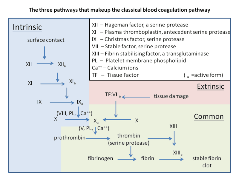 Coagulation Cascade USMLE Step 1