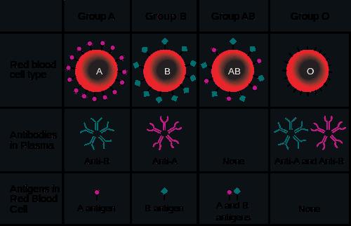 USMLE Step 1 ABO Groups