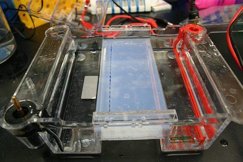 USMLE Step 1 Gel Electrophoresis